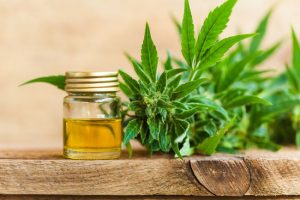 What You Need to Know Regarding CBD Oil
