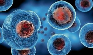 Three Things to Know About Stem Cell Treatments